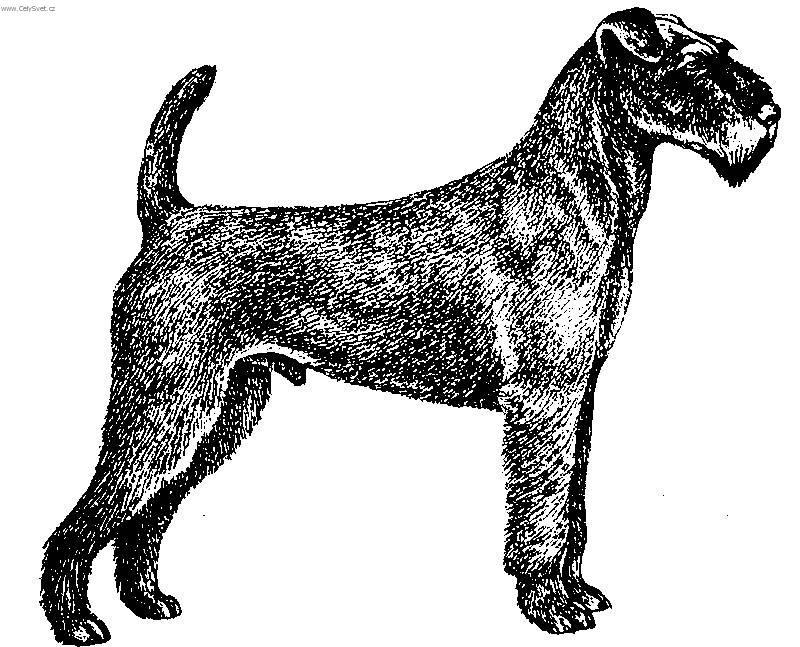 irish terrier coloring pages - photo#45